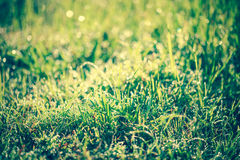 Abstract grass with drops on natural blurred background. Outdoor Royalty Free Stock Images