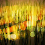 Abstract grass field in sunset Stock Photos
