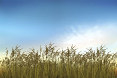 Abstract grass field in sunset. And Time of Dream Images Royalty Free Stock Images