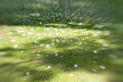 Abstract grass and flowers in park Royalty Free Stock Images