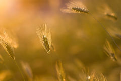 Abstract grass spring or summer backgound Stock Images
