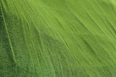 Abstract grass texture background, artificial green Royalty Free Stock Image