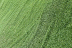 Abstract grass texture background, artificial green Stock Images