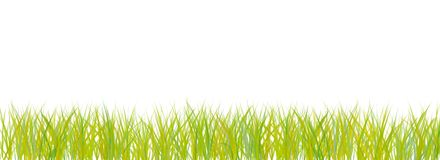 Abstract Grass on White Royalty Free Stock Photos