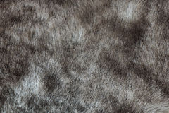 Abstract gray mink fur background (texture) Stock Photos