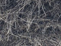 Abstract gray straw texture background royalty free stock image