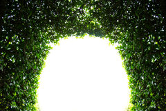 Abstract green arch Royalty Free Stock Photography
