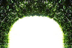 Abstract green arch Stock Photos