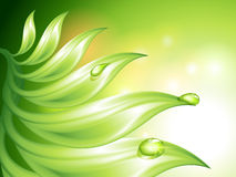 Abstract green background. With leaves and water drops (no mesh Stock Photography