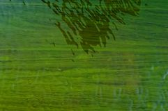 Abstract green background. Abstract green algae water background Stock Photos