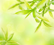 Abstract green background with bamboo. Abstract spring green background with bamboo leaves stock image