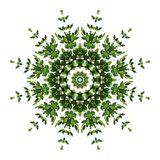 Abstract green background flora mandala pattern, wild climbing v. Ine liana plant with kaleidoscope effect on white background royalty free stock photo