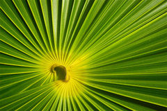 Abstract green background. Illustration of abstract green geometric nature background Stock Photography