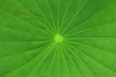 Abstract green background of a leaves at the forest Royalty Free Stock Photo