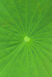 Abstract green background of a leaves at the forest Stock Photography