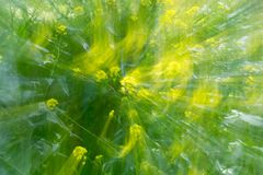 Abstract green background of nature in motion.  Stock Photography