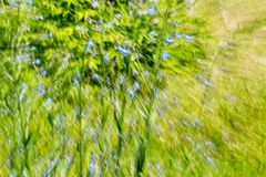 Abstract green background of nature in motion.  Stock Photo