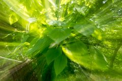 Abstract green background of nature in motion.  Stock Image