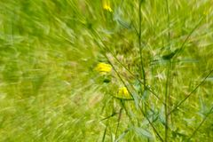 Abstract green background of nature in motion.  Royalty Free Stock Images