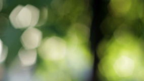 Abstract green background stock video
