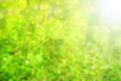Abstract Green background. A sense of freshness Royalty Free Stock Photos