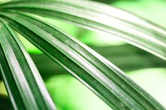 Abstract green or blue  leaf with copy space, using for backgrou. Nd Royalty Free Stock Photos