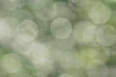 Abstract green blur natural background Stock Photo