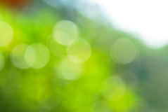Abstract green blur natural background Royalty Free Stock Photo
