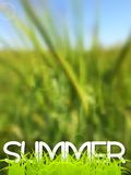 Abstract green blurred summer background Royalty Free Stock Photos
