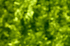 Abstract green bokeh background Royalty Free Stock Photos