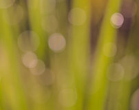 Abstract green bokeh background stock images