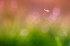 Abstract green bokeh background Royalty Free Stock Image