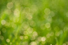 Abstract green bokeh circles Royalty Free Stock Photo