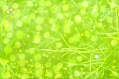 Abstract green bokeh  background Stock Photos