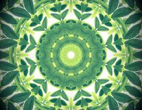 Free Abstract Green Color Nature Background, Tropical Green Leaves Wi Stock Photo - 109164020