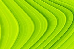 Abstract Green Curves Texture for Background. Abstract image of natural green leaf texture for background, website, banner, business card, invitation card stock images