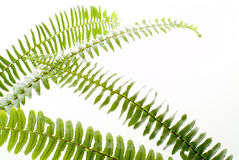 Abstract green fern leaf Stock Photo