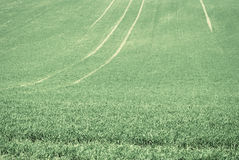 Abstract green field background Stock Image