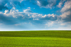 Abstract Green  Fields and Blue Sky Background Royalty Free Stock Photo