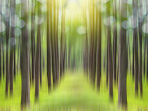 Abstract green forest background with blurred motion Stock Photography