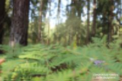 Abstract green forest background with bokeh. Vector background. royalty free illustration