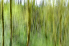 Abstract green forest motion blur background Stock Images