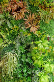 Abstract Green Garden Background Royalty Free Stock Photo
