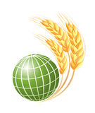 Abstract green globe with wheat ears Stock Images