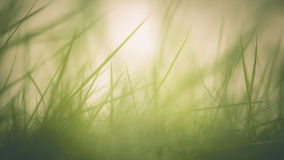 Abstract green grass background Stock Photo