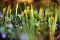 Abstract green grass background, soft focus, sunny day, fresh sp Royalty Free Stock Photos