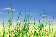 Abstract green grass Stock Photo