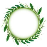 Abstract green grass circle frame vector whit. Wreath as a symbol of celebration or sorrow Stock Photography