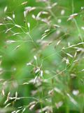 Abstract green grass a natural background stock photo