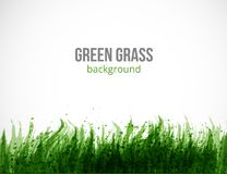Abstract green grunge background with place for your text. Green grass on white background. Vector illustration. Abstract green grunge background with place for Royalty Free Stock Photo